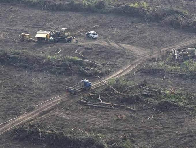 deforesta