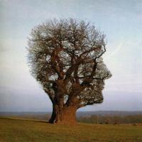 Pensamiento Ambiental