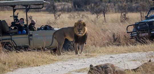QEPD el león Cecil – ¿Cuál será su legado? ¿Y quién debe tomardecisiones?