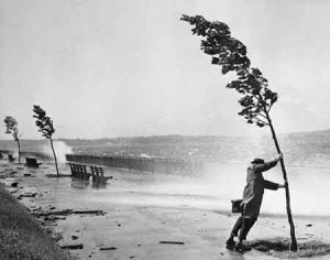 Man Holding Onto Tree During Hurricane Carol