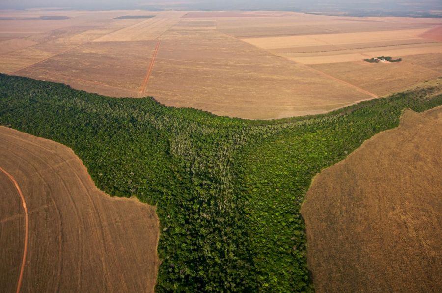 ¿Defensa de la Riqueza Forestal? ¿Protección ambiental de los bosquesnativos?